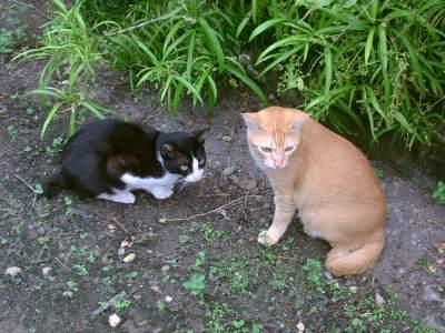 Cara Pelihara Kucing Kampung Bebas Kotoran