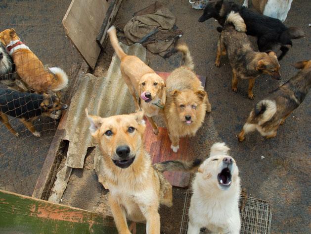 Animal Hoarding (Gangguan Kejiwaan yang Menyengsarakan Hewan)