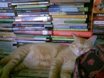 100+ Gambar Hewan Kucing Dan Ciri Cirinya Dalam Bahasa Inggris HD