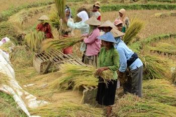 Hasil gambar untuk petani