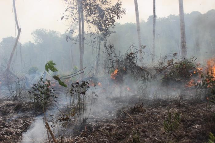 """Hutan Indonesia, antara """"Lahan Perang, Eksploitasi, Eksplorasi dan Penelitian"""""""