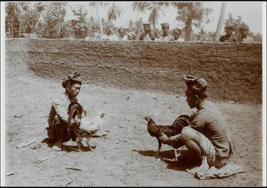 Sejarah Tradisi Sabung Ayam di Pulau Jawa