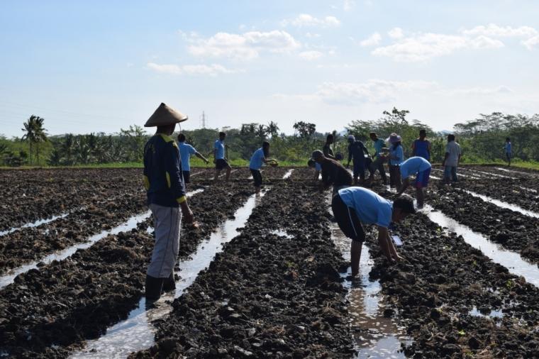 Budaya Gotong Royong Desa Sambigede