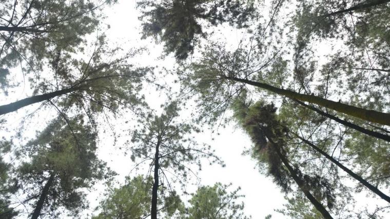 Ke Mana Perginya Dia, Hutan Hujan Kita?