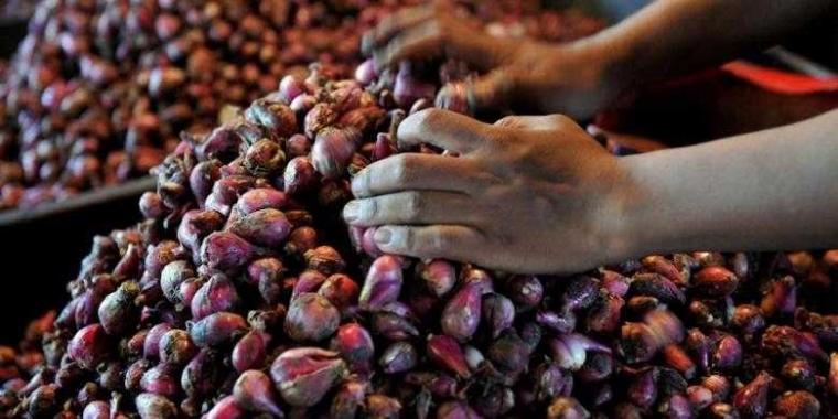Dilema Bawang Merah dan Telur Asin Brebes di Tol Trans Jawa