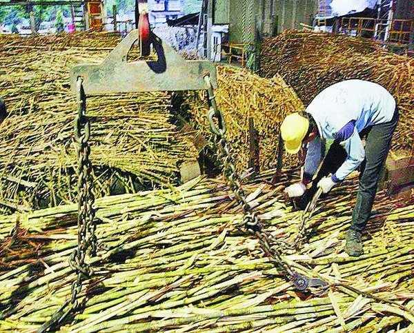 Nasip Petani Tebu di Tengah Impor Gula