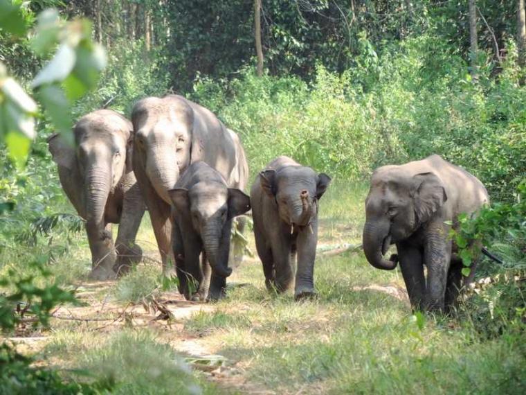 Human Elephant Coexistence