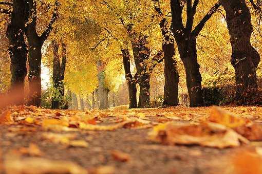 Puisi | Nyanyian Musim Kemarau