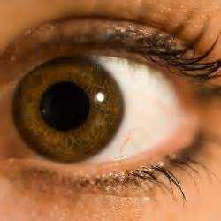 Kedipan Mata Mempengaruhi Kognitif Seseorang dalam Refraksi Optisi