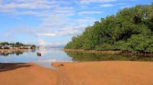 Nyanyian Sumbang Mangrove Teluk Ambon