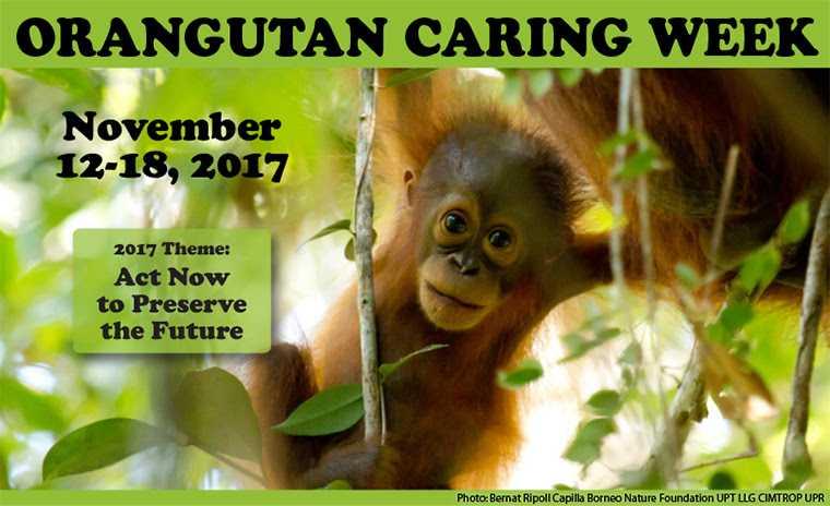 Mengapa Kita Penting untuk Merayakan Pekan Peduli Orangutan?