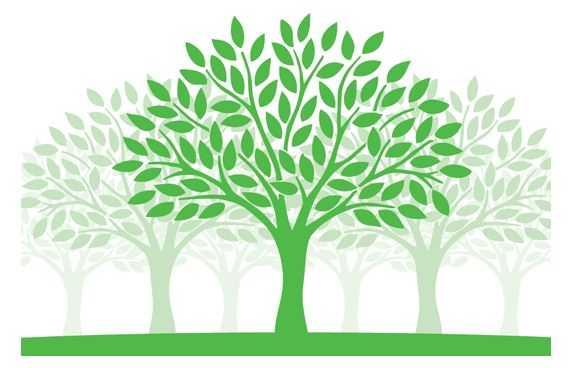 Tentang Pohon