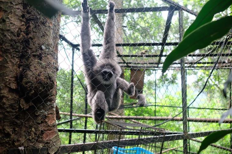Mengunjungi Owa Jawa, Si Primata Endemik yang Setia