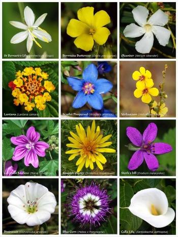 Download 4700 Koleksi Gambar Macam2 Bunga Dan Namanya Paling Cantik HD