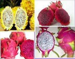 Manfaat Dragon Fruit bagi Kesehatan