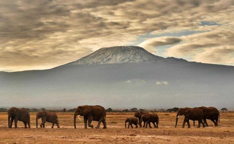 Gajah Pun Tersenyum Menyambut Tahun 2018