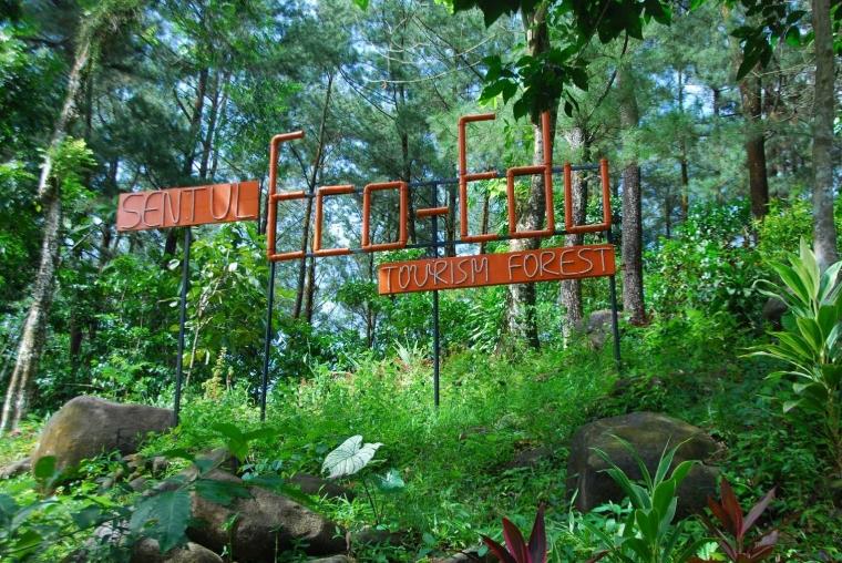 Bakti Untuk Hutan Lestari
