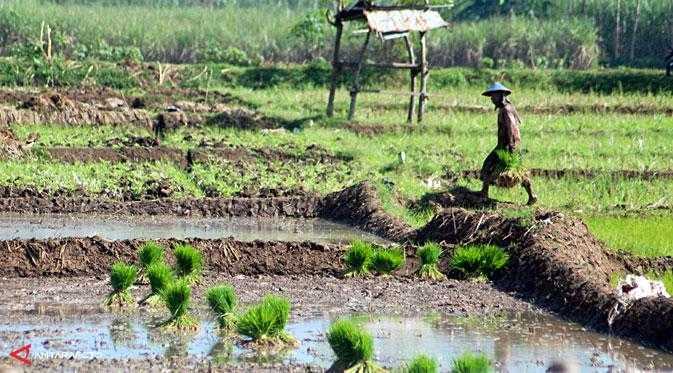Menyoalkan Rintangan Terbesar dalam Pembangunan Pertanian