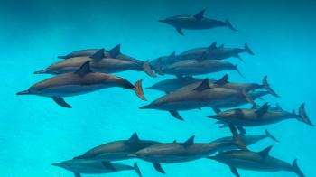 Download 710 Koleksi Gambar Ikan Lumba Lumba Di Laut Terbaru