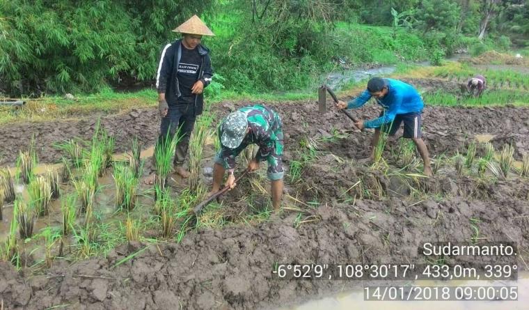 Babinsa dan Petani Garap Sawah di Desa Jambugeulis Kecamatan Cigandamekar