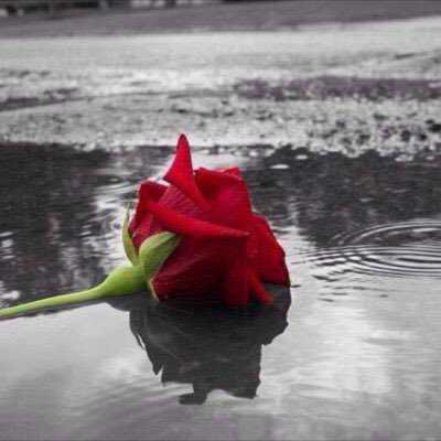 Kelopak Bunga yang Belum Mekar (3)