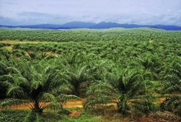 Wakaf Produktif Perkebunan Kelapa Sawit di Indonesia