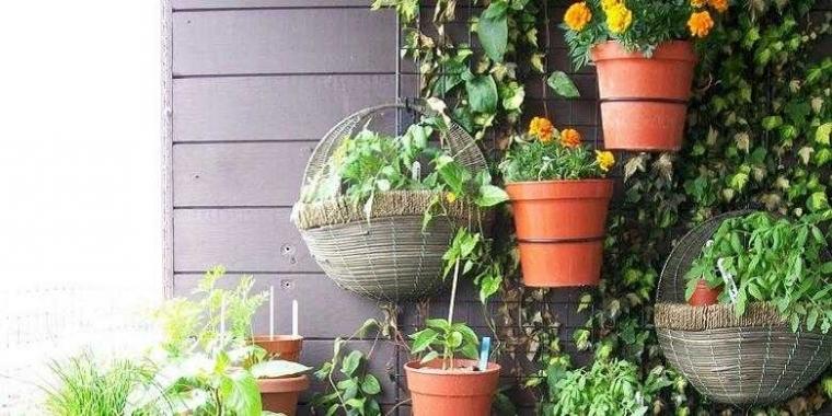 Taman Vertikal Solusi Berkebun di Rumah Perkotaan