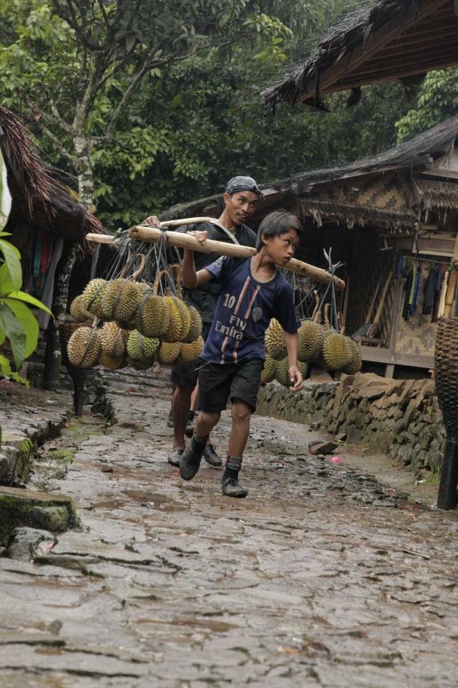 Potensi Durian Baduy yang Menunggu Perhatian dan Pengembangan