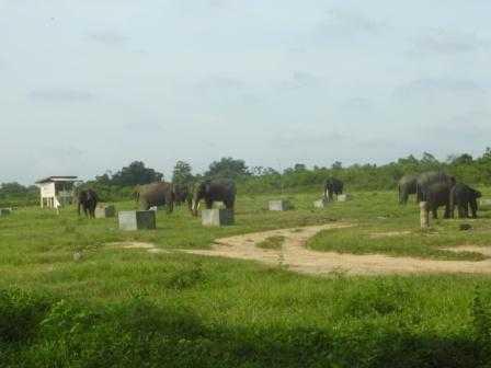 Bermain di Kandang Gajah