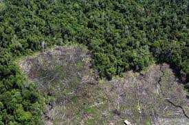 Keterlibatan TNI AD dalam Melaksanakan Sosialisasi MOU Terkait Kerusakan Hutan