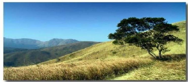 Puisi | Kepada Penyapa Pohon Sunyi
