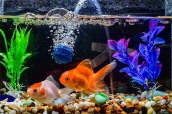 Hilangkan Stres Dengan Akuarium Ikan Hias Halaman All