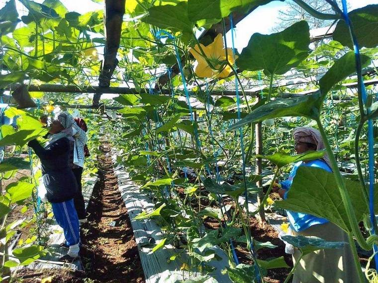 Balai Diklat Pertanian Aceh Akan Jadi Pusat Pelatihan Pertanian Organik