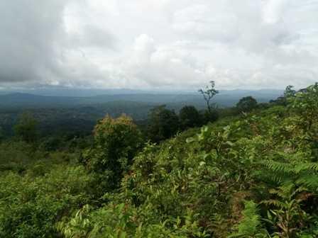 """Gerakan Tanam 1000 Pohon di Puncak Bulu Tombolo untuk Peringati """"BAKRI"""""""