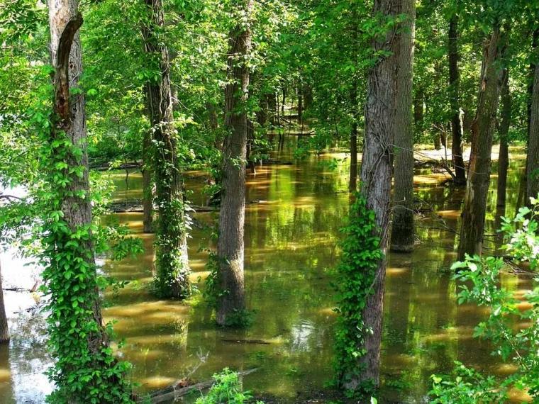 Hutanku Rusak, Bencana Banjir dan Longsor Pun Kerap Terjadi