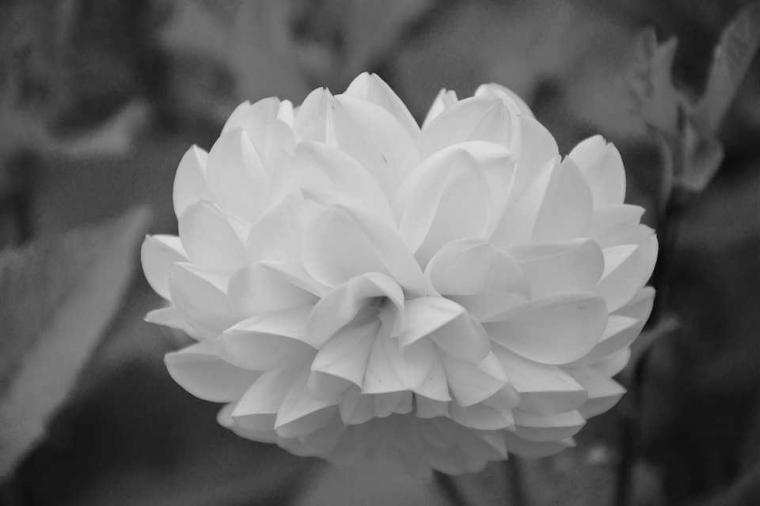 Cerpen | Bunga Tujuh Helai dengan Tujuh Pesan Berwarna