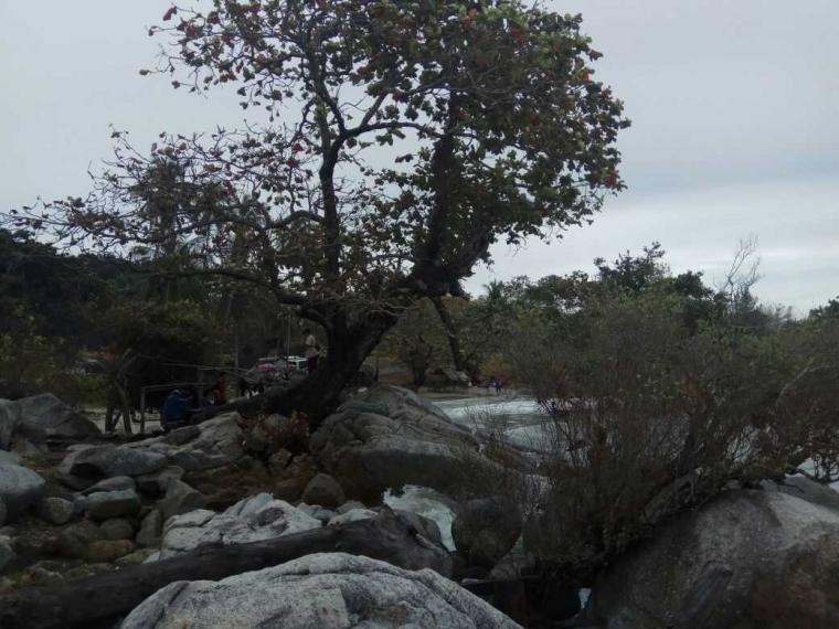 Pohon di Atas Batu