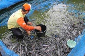 Hasil gambar untuk budidaya ikan