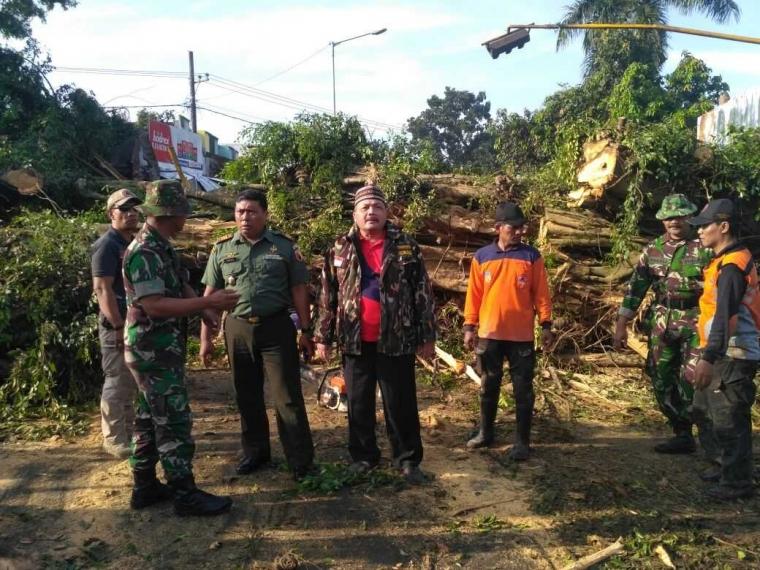 Reaksi Cepat Buka Akses Dampak Pohon Tumbang