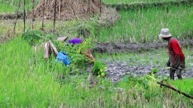 Sore Memberontak di Desa Sekitar Semen Rembang, Menolak Tunduk Dibohongi