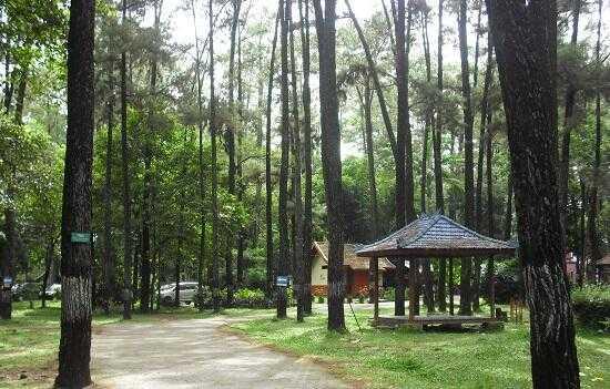 Manjakan Diri Dalam Keramaian di Hutan Kota BSD City