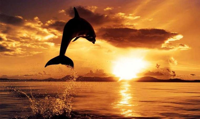 Interaksi dengan Lumba-lumba di Pantai Lovina