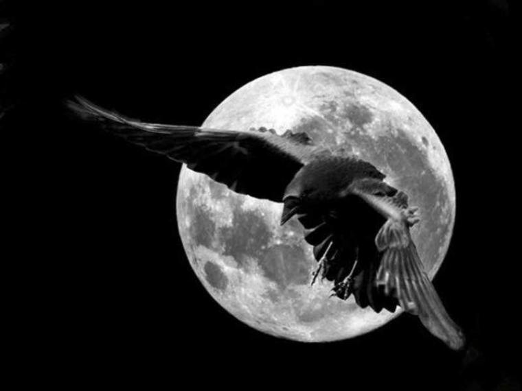 Sajak kepada Burung Bence, Orang Tua, dan Guru