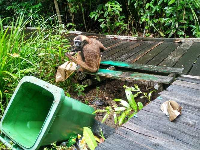 Alasan di Balik Larangan Pengunjung Memberi Makan Satwa di Hutan Kota Ketapang