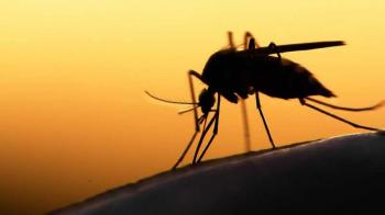 53 Gambar Nyamuk Untuk Anak Tk Paling Hist