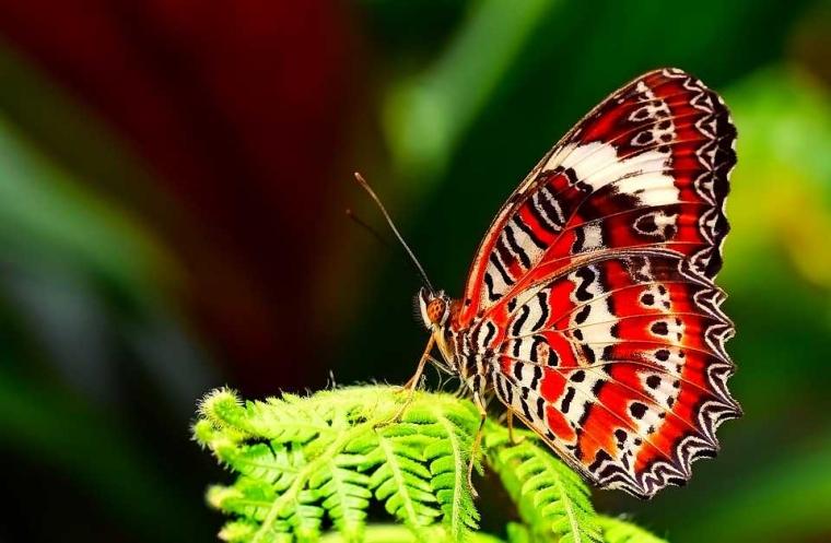 Puisi | Kupu-kupu Terperangkap Waktu