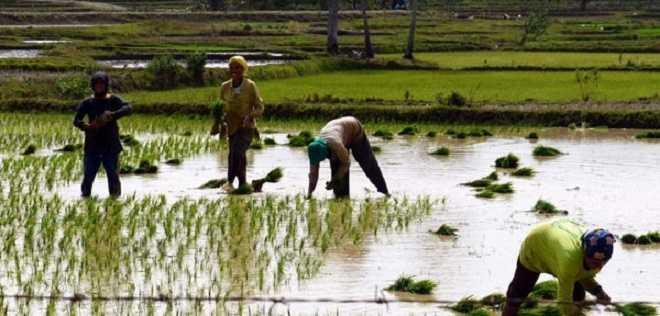 Melalui KJ 4, Petani Lampung akan Sejahtera