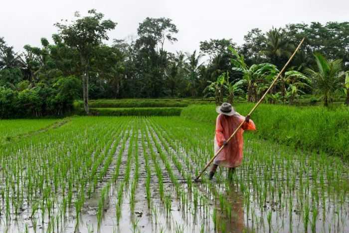 Petani Pertama Asia Tenggara Berasal dari Tiongkok Selatan