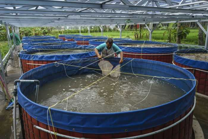 Budi Daya Ikan ala Bioflok dan Prospek Bisnis Modern
