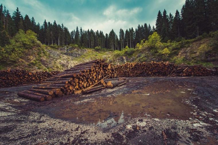 Melihat Hutan Hujan sebagai Nafas yang Mulai Menghilang